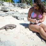 iguanas exuma bahamas